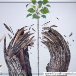 علاج الترامادول بالأعشاب