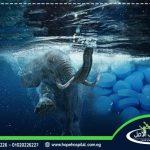 حبوب الفيل الازرق